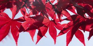cropped-leaves-1193378_960_720.jpg